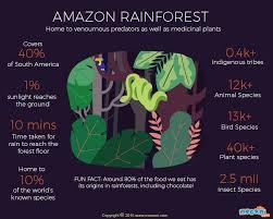 Adaptations Of Tropical Rainforest Plants - 292 best rainforest lesson plans images on pinterest rainforests