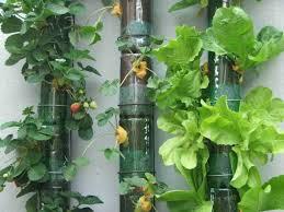 vertical vegetable garden planters