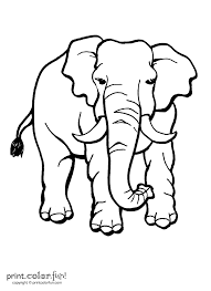 elephant with tusks coloring page print color fun