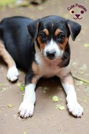 cute puppies 2 wallpapers cute puppies wallpaper collection 1 u2013 cute puppies now
