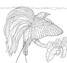 birds paradise coloring downloads