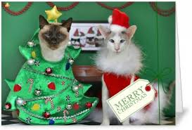 creating cat christmas cards selecting a printing service part 1