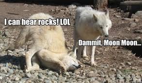 Crazy Wolf Meme - moonmoon fiona foley