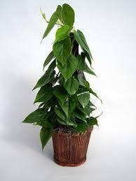28 houseplant for low light image gallery terrarium plants