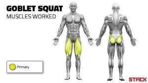 Muscles Used During Bench Press Why The Goblet Squat Is The Best Type Of Squat For Young Athletes