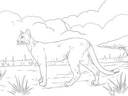 florida panther coloring free printable coloring pages