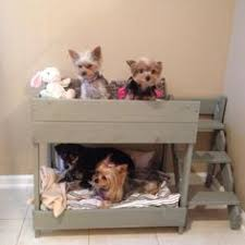 Bunk Bed For Dogs Modern Murphy Bed For Dogs A Gorgeous Alternative To The Frumpy