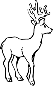deer coloring pages pictures of animal whitetail free