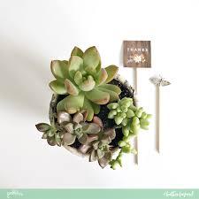 Succulent Planter Diy Decoupage Succulent Planter Teacher Gift Pebbles Inc