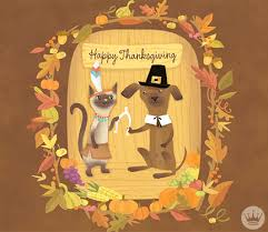 cats and dogs thanksgiving gif by hallmark ecards find on