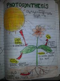 photosynthesis perfect example of a diagram students could do on