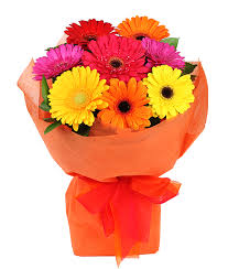 gerbera bouquet bright gerbera bouquet flower delivery auckland flowers auckland