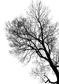 free images forest branch winter black and white trunk