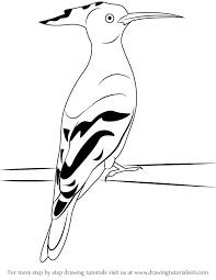 learn draw hoopoe birds step step drawing tutorials