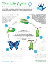 infographic the life cycle kids discover