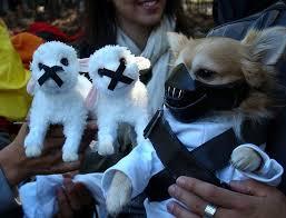 Disney Halloween Costumes Dogs 56 Cute Pets Disney Marvel U0026 Images