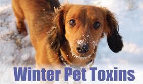 Pet Pet Poison Helpline Animal Poison Control Center
