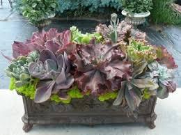resume modernos terrarios suculentas imagen 34 jardinería pinterest suculentas pequeños jardines