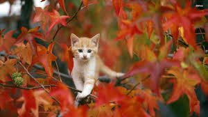 cute fall wallpapers fall leaves full hd pics wallpapers shu shu wallpaper