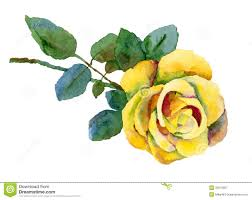 yellow rose stock illustration image of flower rose 33670957