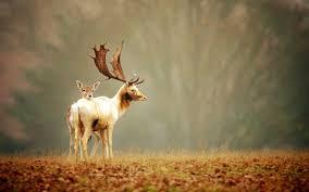 100 home interior deer picture wonderful deer antler