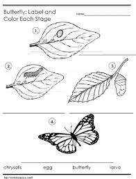 life cycle of a butterfly worksheet worksheets