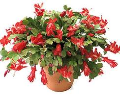 best plants for air quality top indoor plants best air filters for homechristmas and easter