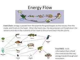 what travels through a food chain or web images Energy and matter energy flow cycle organisms and energy almost jpg