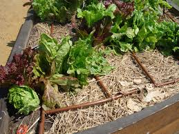 repair drip irrigation guide how to fix it yourself pro tips