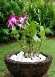 orchids care orchid diseases and orchid pests