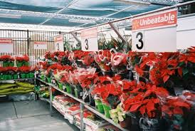 home depot and lowes point setters black friday sale view jerry montgomery on big box poinsettias greenhouse grower