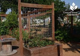Oak Trellis Blog Central Texas Gardener