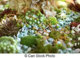 rock garden stock photo images 33 824 rock garden royalty free