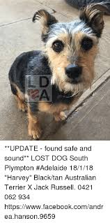 Lost Dog Meme - update found safe and sound lost dog south plympton adelaide