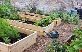 the secrets to growing a high yield vegetable garden rodale u0027s