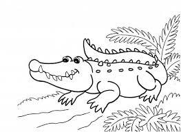 alligator colouring3 alligator colouring3 u2013 colouring pics