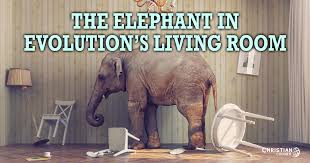 elephant in the living room the elephant in evolution s living room christian courier