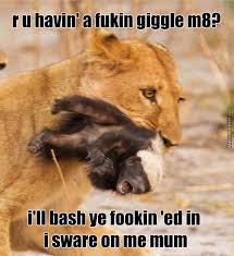 Honeybadger Meme - honey badger vs lion by hudsonuk meme center