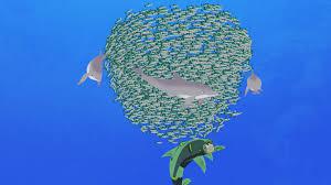wild kratts u2013 animated chris with feeding dolphins mar vista mom