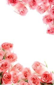 Bouquet Of Roses Pink Bouquet Of Roses Picture Free Stock Photos In Image Format