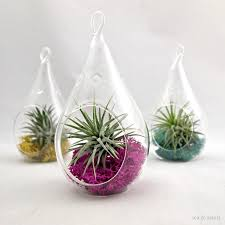 small water drop air plant terrarium choose your own moss color