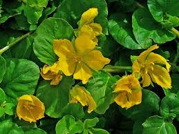 Plants That Don T Need Much Sun Low Maintenance Ground Covers That Suppress Weeds Dengarden