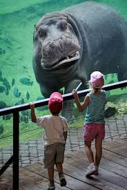 131 best megan u0027s hippo board images on pinterest animals