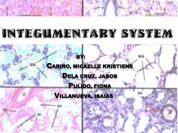 Human Anatomy Integumentary System Comparative Anatomy Integumentary System