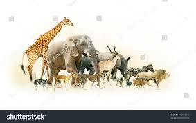 african safari animals common african safari animals walking together stock photo