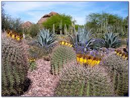 Desert Botanical Garden Restaurant Desert Botanical Garden Restaurant Succulent Carnivorous