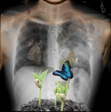butterflies in my stomach by finch48 on deviantart