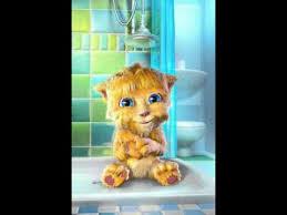 imagenes groseras de gatos gato tarupido grosero rascael youtube