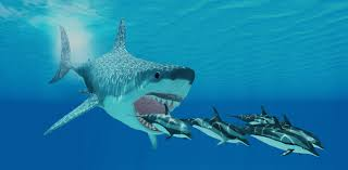 biggest megalodon shark monster megalodon sharks lurking in our oceans be serious