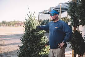 christmas trees in leland patrick tucker from mahogany rock tree